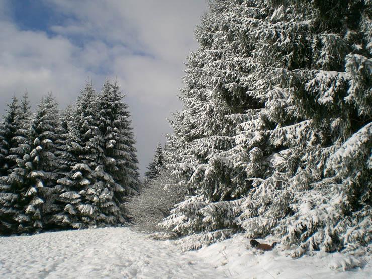 winter38