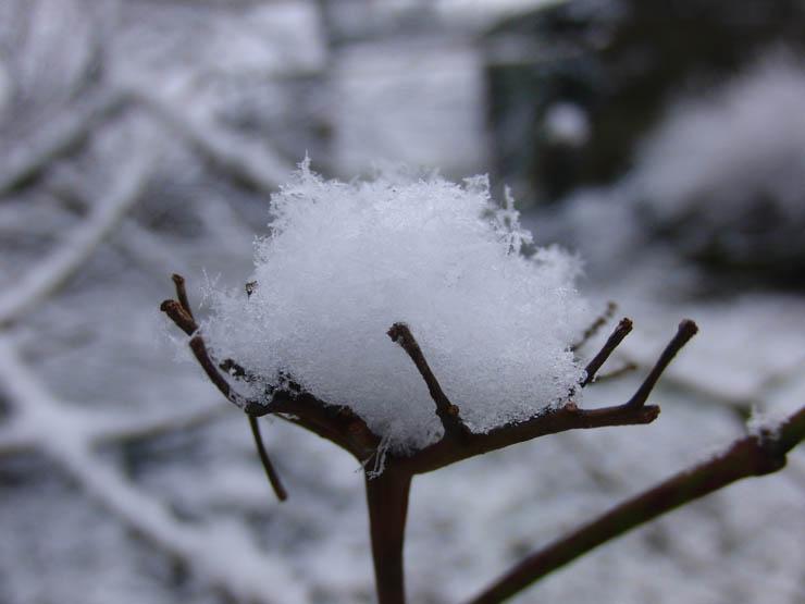 winter40