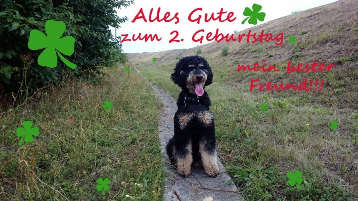 paddy 2Jahre